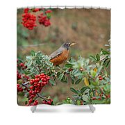 Two Robins Eating Berries Shower Curtain