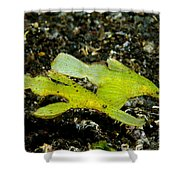 Two Robust Ghost Pipefish In Volcanic Shower Curtain by Steve Jones
