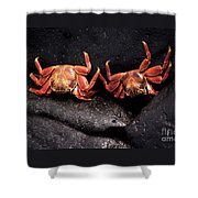 Two Sally Lightfoot Crabs Shower Curtain
