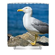 Two Seagull Shower Curtain