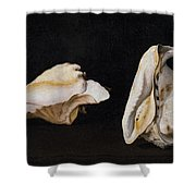 Two Shells Shower Curtain
