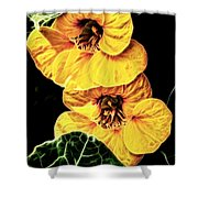 Two Shy Sisters Fractal Shower Curtain