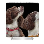 Two Spaniels Shower Curtain