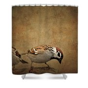 Two Sparrows Shower Curtain