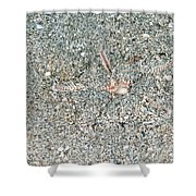 Two-spined Sea Star Shower Curtain