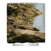Two Spotted Sandpipers On The Flint Rivers Banks Shower Curtain