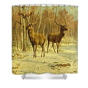 Two Stags In A Clearing In Winter Shower Curtain
