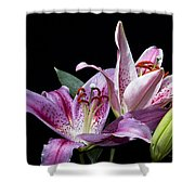 Two Star Lilies Shower Curtain