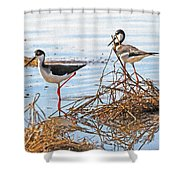 Two Stilts At The Pond Shower Curtain