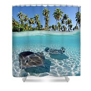 Two Stingrays 1 Shower Curtain