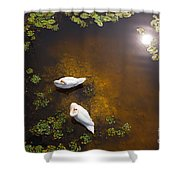 Two Swans With Sun Reflection On Shallow Water Shower Curtain