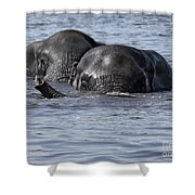 Two Swimming Elephants Shower Curtain