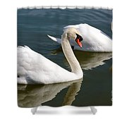 Two Swimming Swans Shower Curtain