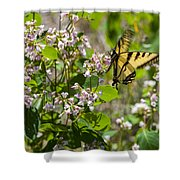 Two Tailed Swallowtail Shower Curtain