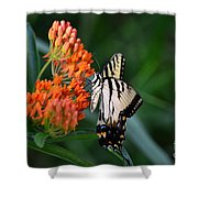 Two-tailed Swallowtail Shower Curtain