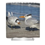 Two Terns Talking Shower Curtain