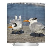 Two Terns Watching Shower Curtain