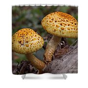 Two Toadstool Chums On A Log Shower Curtain