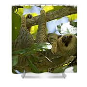 Two-toed Sloth Relaxing With A Grin Shower Curtain