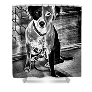 Two Tone Toby-jack Russell Shower Curtain