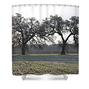 Two Tree Frosty Morning Shower Curtain
