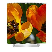 Two Tulips Shower Curtain by Elena Elisseeva