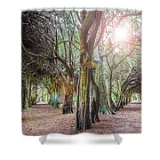 Two Tunnels Taxus Shower Curtain