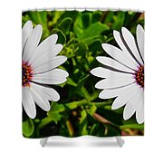 Two White Daisies Shower Curtain