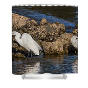 Two White Herons And A Coot Shower Curtain