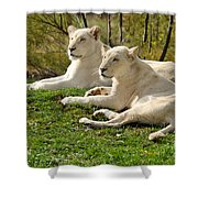 Two White Lions Shower Curtain