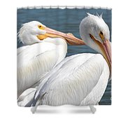 Two White Pelicans Shower Curtain