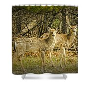 Two White Tailed Deer Shower Curtain