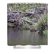 Two Working Beavers Shower Curtain