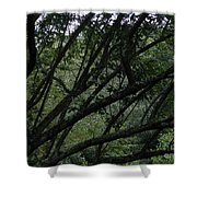 Tyler Tree 2 Shower Curtain