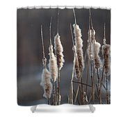 Typha Cattail Spikes Seeds Shower Curtain