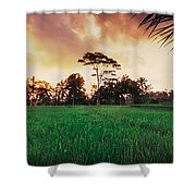 Ubud Rice Fields Shower Curtain