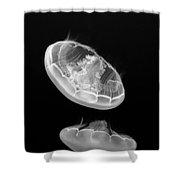 Ufos - Moon Jelly Aurelia Labiata In Black And White. Shower Curtain
