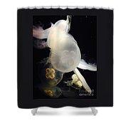 Umbrella Jellyfish 1 Shot At Long Beach California Aquarium By Richard W Linford Shower Curtain