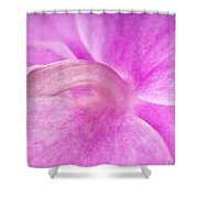 Under An Orchid Shower Curtain
