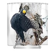 Under Cover Black-backed Shower Curtain