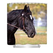 Under Rein Shower Curtain