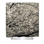 Under The Cherry Tree - Bw Shower Curtain by Hannes Cmarits
