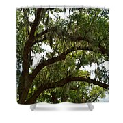 Under The Live Oak Tree Shower Curtain
