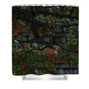 Under The Old Oak Tree Shower Curtain