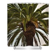Under The Palm II Shower Curtain
