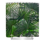 Under The Palm Tree Shower Curtain