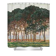 Under The Pines. Evening Shower Curtain