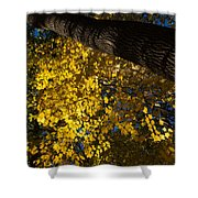 Under The Trees - Lambton Woods Toronto Canada Shower Curtain