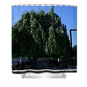Under The Weeping Tree Shower Curtain