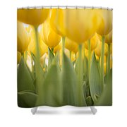 Under Yellow Tulips - 8x10 Format Shower Curtain